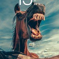 Profilový obrázok používateľa Alzbeta Polakova