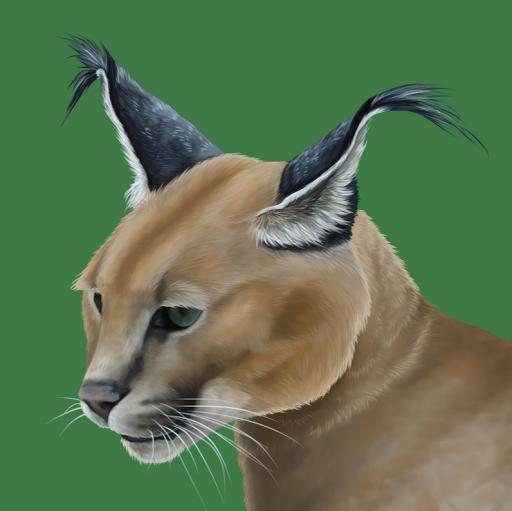 Profilový obrázok používateľa Kobliha K