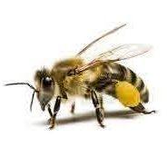 Profilový obrázok používateľa Včelí Med